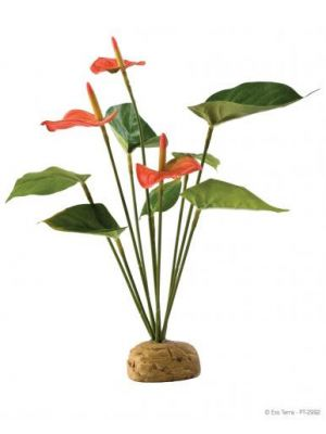 Exo Terra Anthurium Bush Plant