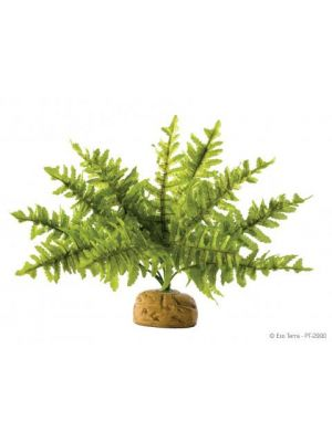 Exo Terra Boston Fern Plant