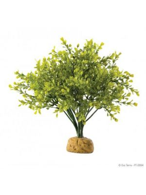 Zoo Med Mexican Phyllo Bush Plant Buy Reptile Supplies