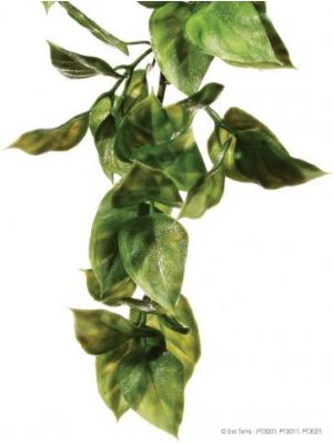 Exo Terra Large Amapallo Jungle Plant