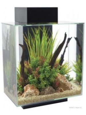 Fluval Edge LED Aquarium 12gl