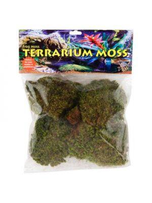 T-Rex Frog Moss