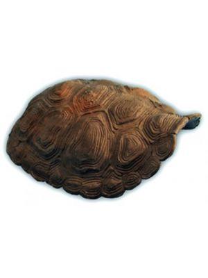 CC Pets Tortoise Hide Shell