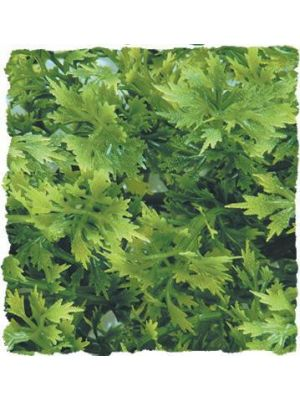 Zoo Med Australian Maple Bush Plants