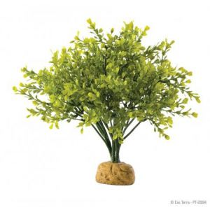 Exo Terra Boxwood Bush Plant